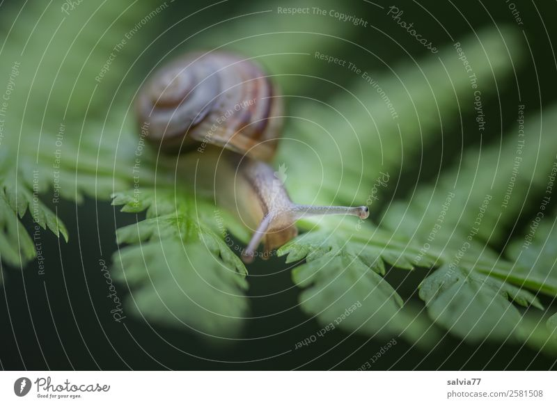 Nature Plant Animal Leaf Environment Lanes & trails Touch Target Advertising Snail Crawl Fern Feeler Slowly Mollusk