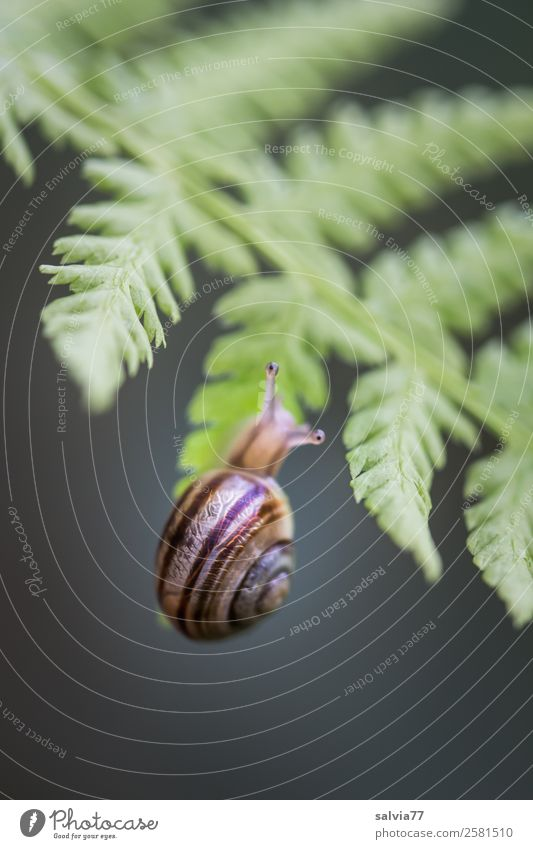 Screw Climbing Nature Plant Fern Leaf Wild plant Forest Animal Snail Brown-lipped snail 1 Hang Small Gray Green Black Speed Mobility Lanes & trails Slowly