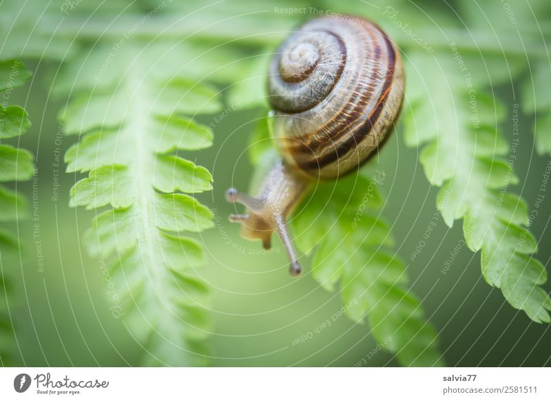between fern leaves Nature Plant Fern Leaf Foliage plant Wild plant Animal Snail 1 Natural Green Lanes & trails Climbing Structures and shapes Feeler Crawl