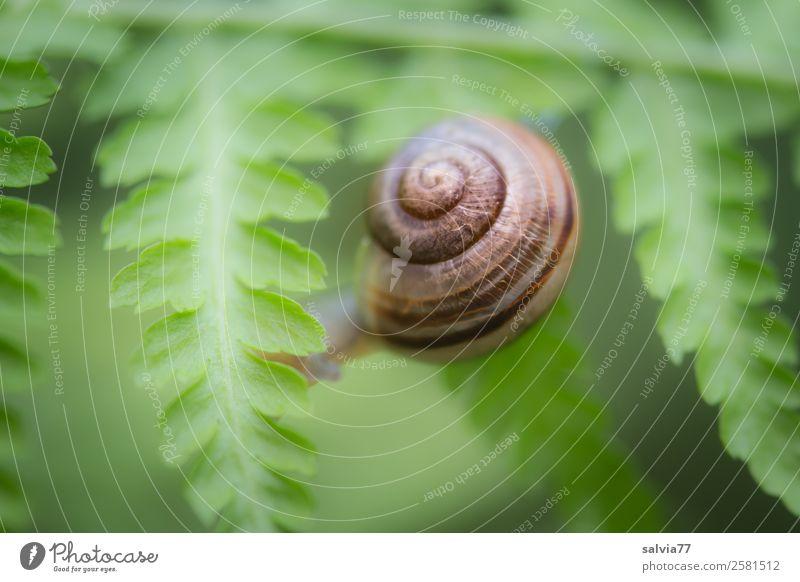 Nature Plant Animal Leaf Environment Lanes & trails Protection Snail Spiral Crawl Symmetry Fern Foliage plant Wild plant Fern leaf
