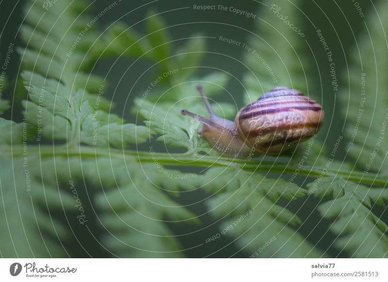 Nature Plant Green Animal Leaf Forest Natural Lanes & trails Small Brown Protection Target Mobility Snail Spiral Crawl