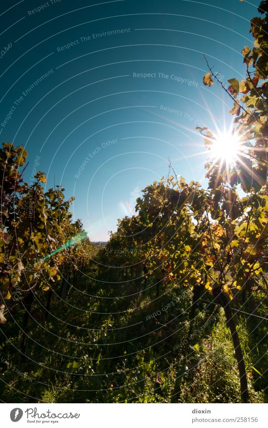 always look on the bright side of life! Wine Sparkling wine Prosecco Champagne Agriculture Forestry Winegrower Environment Nature Landscape Plant Sky