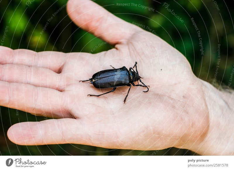 Big bug in the hand! Life Hand 18 - 30 years Youth (Young adults) Adults 30 - 45 years Environment Nature Animal Spring Summer Autumn Garden Park Field