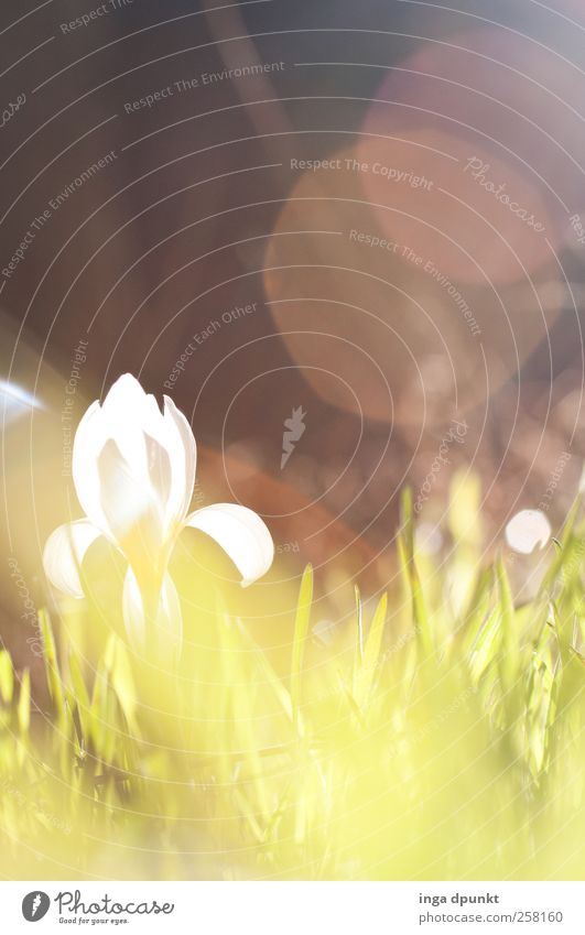 SPRING MESSENGERS Environment Nature Landscape Plant Water Drops of water Sun Sunlight Spring Weather Beautiful weather Warmth Flower Grass Blossom Wild plant