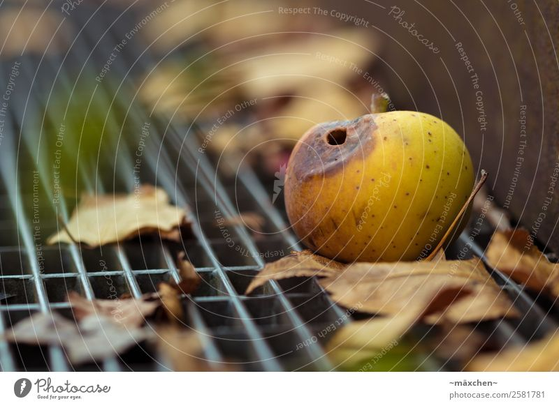 Autumn is coming... Apple Steel Old Brown Yellow Gold Green Autumnal Leaf Putrefy Putrid Eroded Wormhole Lie Metal grid Ground Windfall Fruit Close-up
