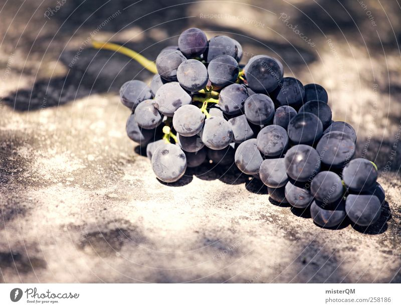 Nature Healthy Esthetic Vine Delicious Wine Berries Noble Ingredients Grape harvest Vineyard Wine growing Bunch of grapes Raw materials and fuels Red wine