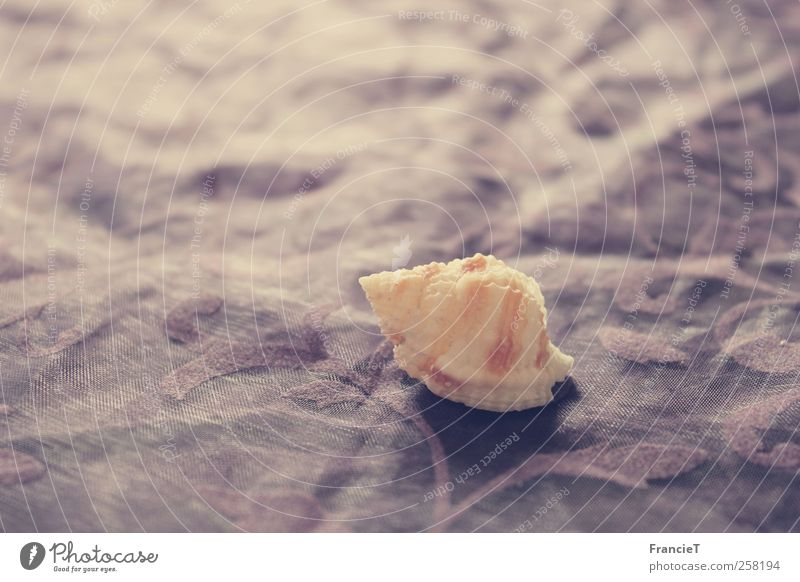 White Loneliness Calm Small Style Moody Brown Natural Design Decoration Uniqueness Simple Violet Bizarre Snail Inspiration