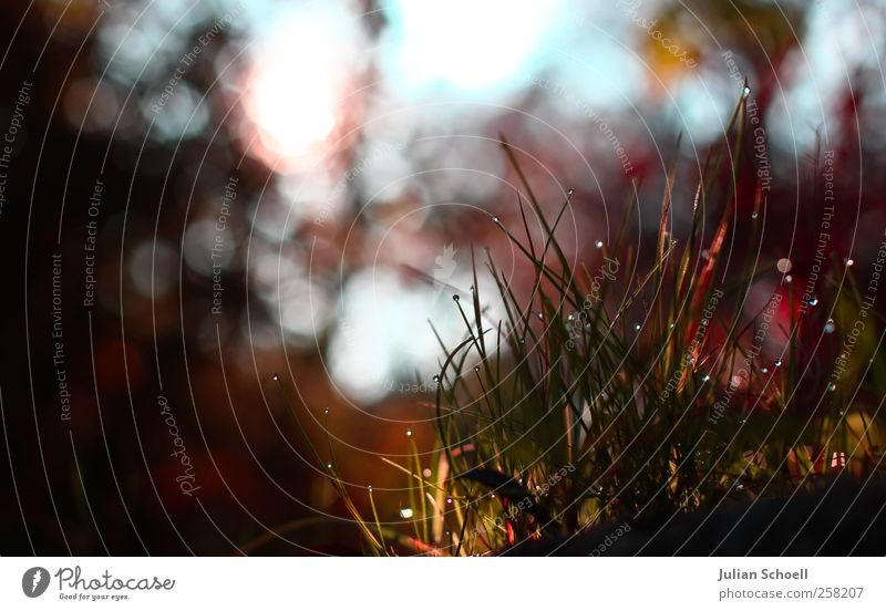 breath of the spheres Plant Drops of water Sun Autumn Beautiful weather Grass Bushes Fresh Glittering Warmth Blue Green Red Purity Esthetic Idyll Colour photo