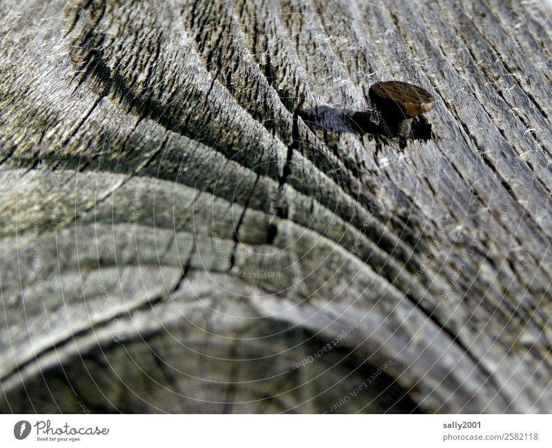 cohesive Tree Old Gray Wood Nail Rust To hold on Annual ring Weathered Knothole sprocket Attachment Colour photo Exterior shot Deserted Day