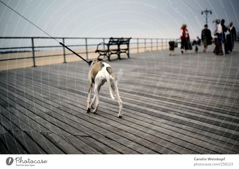Sunday walk on the Boardwalk. Vacation & Travel Trip Beach Walking Dog Line Wood To go for a walk Promenade Coney Island New York City Colour photo