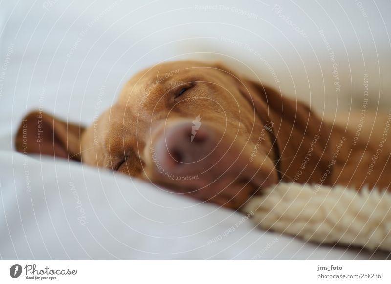 Dog Animal Calm Emotions Pet
