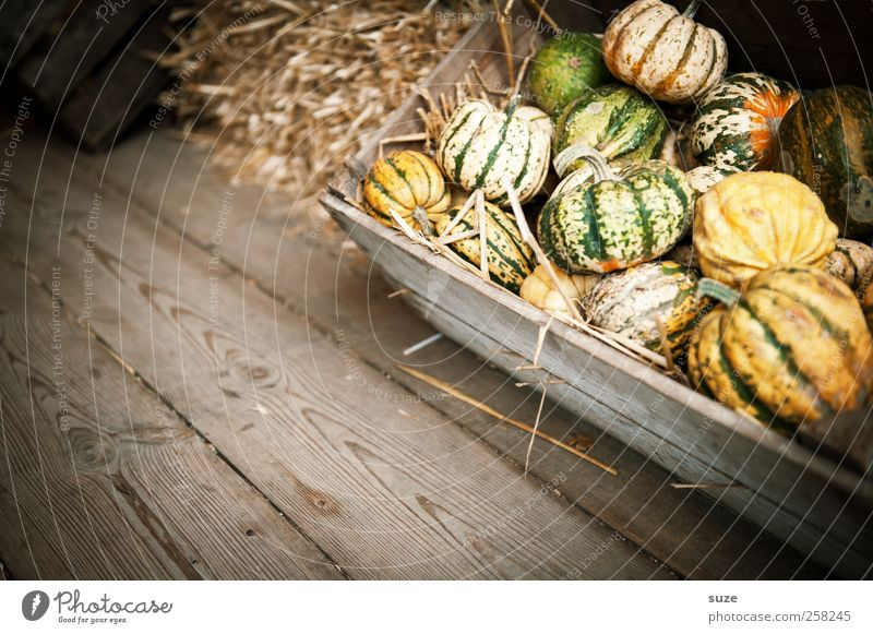 Yellow Autumn Small Feasts & Celebrations Natural Food Decoration Cute Round Vegetable Organic produce Tradition Crate Basket Autumnal Wooden floor