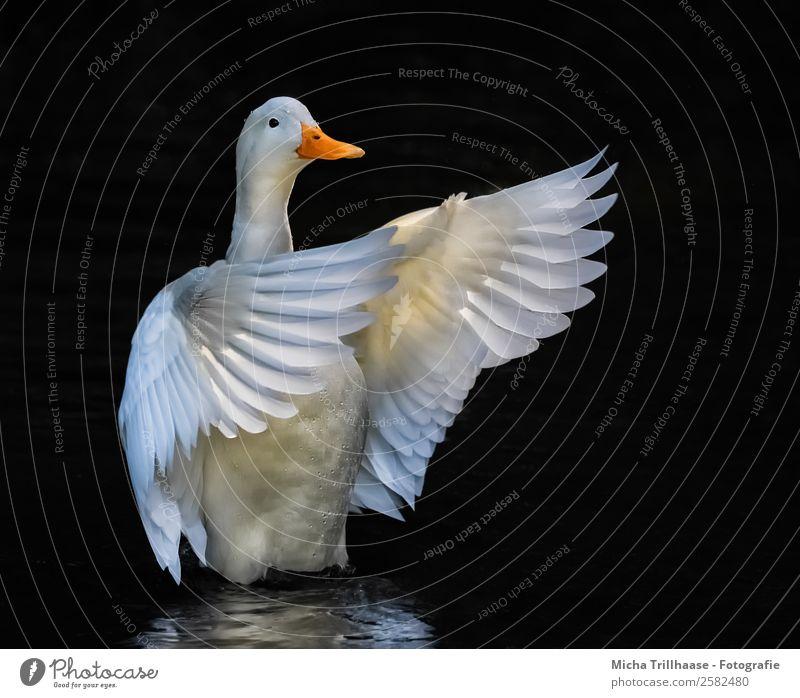 Nature Water White Animal Black Yellow Movement Lake Orange Bird Flying Illuminate Glittering Elegant Wild animal Esthetic