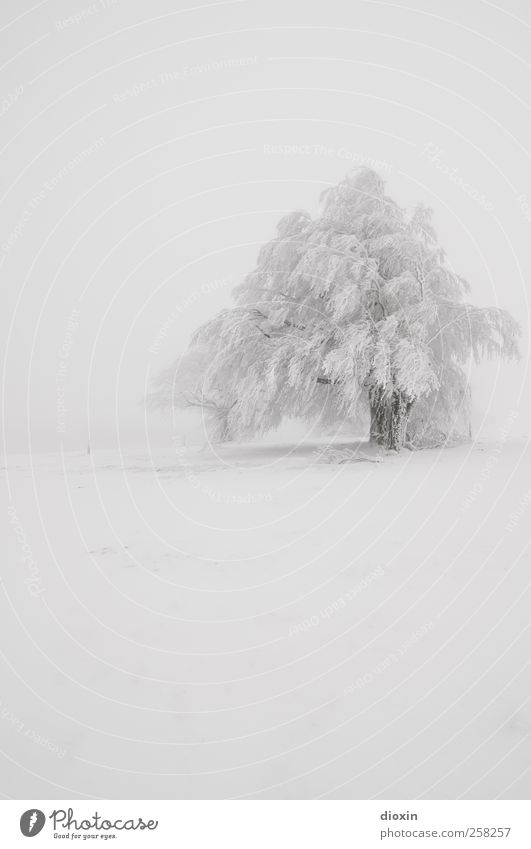 Nature White Tree Plant Vacation & Travel Winter Cold Snow Environment Landscape Snowfall Weather Ice Trip Adventure Climate