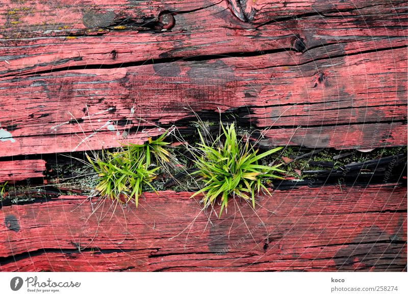 Nature Green Red Plant Summer Black Environment Wood Grass Spring Natural Growth Authentic Transience Simple Dry