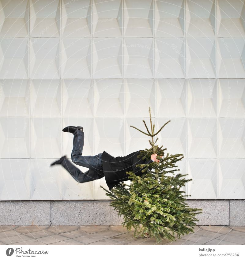 knut sales Feasts & Celebrations Christmas & Advent Human being Life 1 Environment Nature Tree Wall (barrier) Wall (building) Sign Jump Christmas tree