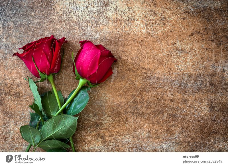 Red roses Feasts & Celebrations Valentine's Day Mother's Day Wedding Flower Rose Natural Nature Romance Love Rust Copy Space Blossom leave Leaf Colour photo