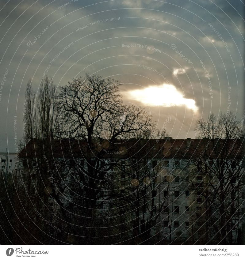 prospect Calm Sky Clouds Winter Tree Town Downtown House (Residential Structure) Building Apartment Building Town house (Terraced house) Window Stone Concrete