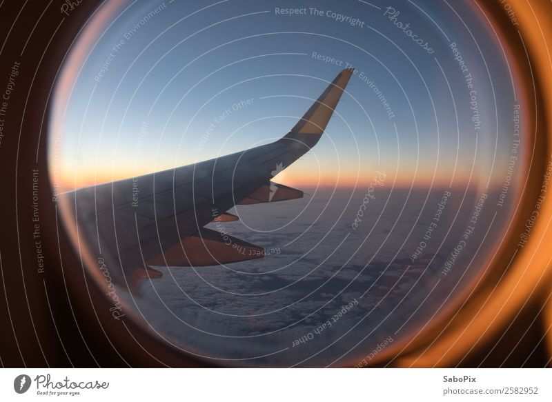 Flight into the morning Airplane Flying Warmth Moody Warm-heartedness Wanderlust Adventure Colour Horizon Vacation & Travel Wing Airplane window Comforting