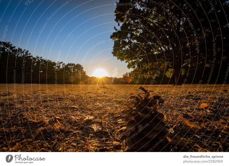 THE AUTUMN II Nature Landscape Plant Sky Cloudless sky Sun Sunrise Sunset Sunlight Autumn Weather Beautiful weather Tree Grass Fir cone Garden Park Meadow