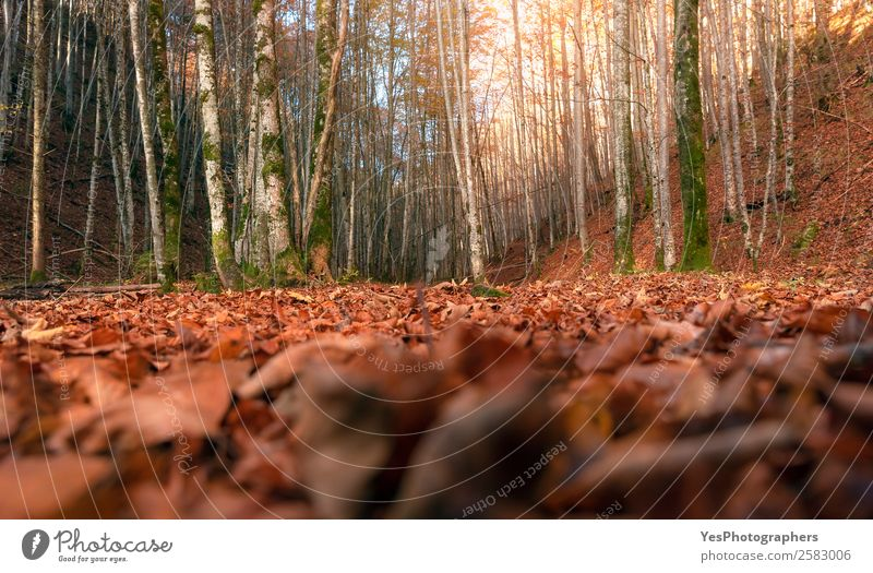 Deciduous autumn forest at ground level Nature Autumn Beautiful weather Leaf Field Forest Bright Natural Gold Determination Bavaria Fussen Germany October