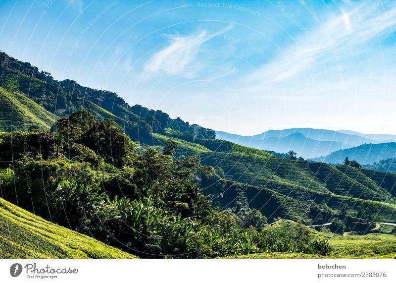 tea Vacation & Travel Tourism Trip Adventure Far-off places Freedom Nature Landscape Sky Clouds Plant Leaf Agricultural crop Tea plants Tea plantation