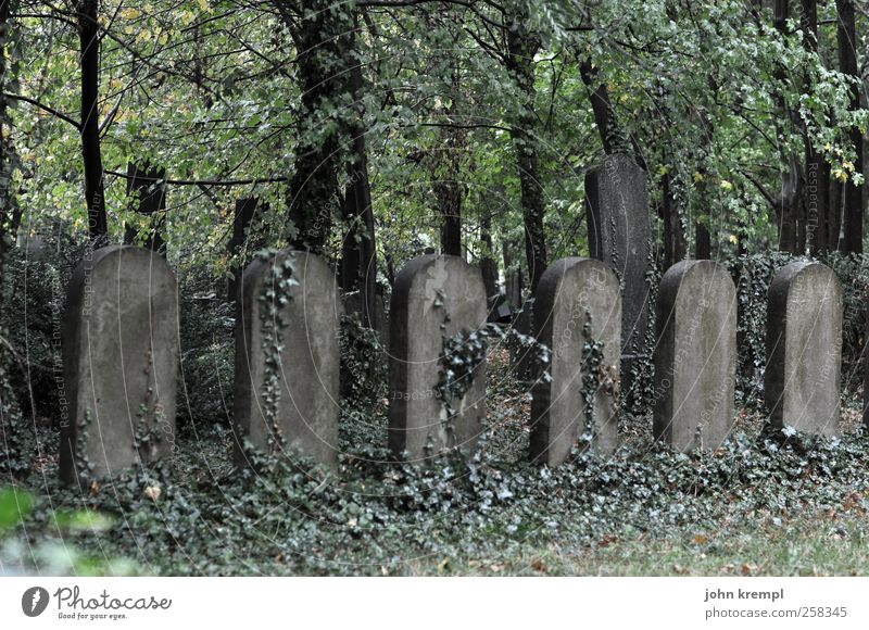 At ease! Plant Tree Ivy Vienna Austria Ruin Cemetery Tourist Attraction Tombstone Stone Crucifix Growth Dark Creepy Historic Gray Green Romance Compassion
