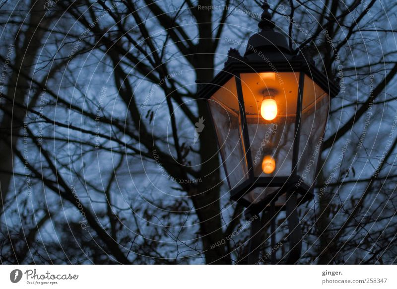 There's always light somewhere. Environment Nature Plant Sky Winter Bad weather Rain Warmth Tree Park Dark Creepy Bright Cold Trashy Gloomy Blue Lamp Lantern