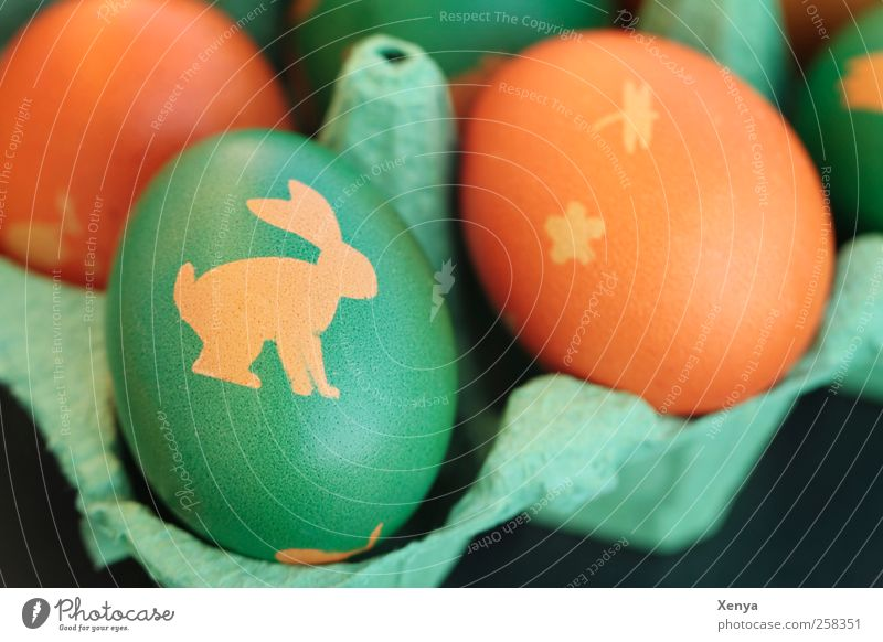 Green Yellow Orange Easter Egg Painted Easter Bunny Easter egg Eggs cardboard