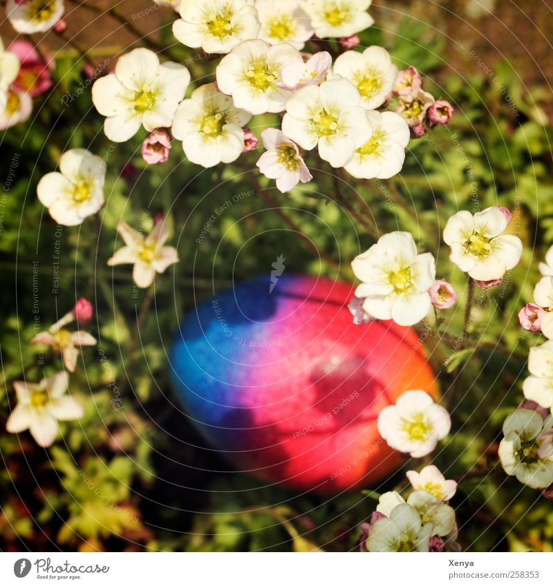 Got one! Easter egg Blue Multicoloured Red Hide Orange Hiding place Colour photo Deserted Blur
