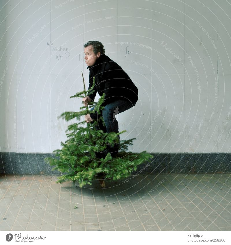 Human being Man Christmas & Advent Nature Tree Plant Adults Environment Movement Jump Masculine Stand Christmas tree Fir tree Balance