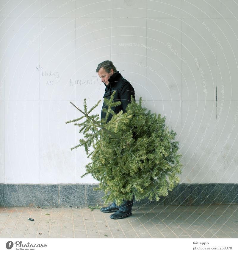 bye bye knut Human being Masculine Man Adults 1 30 - 45 years Environment Nature Plant Tree Stand Christmas tree Christmas & Advent Goodbye Coniferous trees