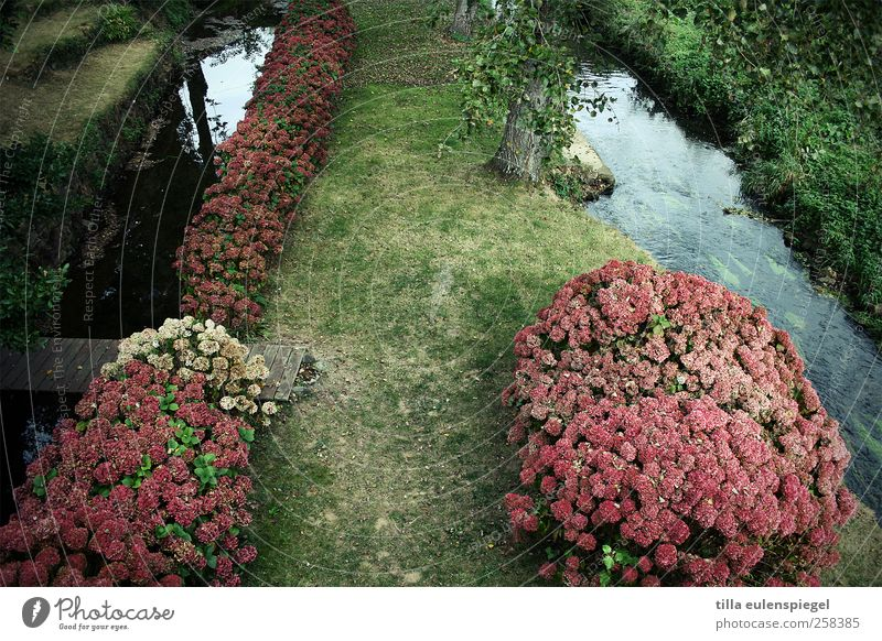 brittany Nature Plant Tree Flower Grass Rhododendrom Garden Meadow Brook Natural Green Pink Footbridge Colour photo Exterior shot Bird's-eye view