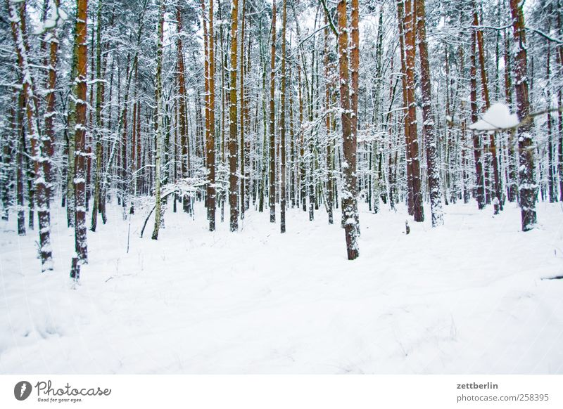 Nature Tree Plant Winter Forest Cold Snow Environment Landscape Berlin Weather Ice Climate Frost Tree trunk Climate change