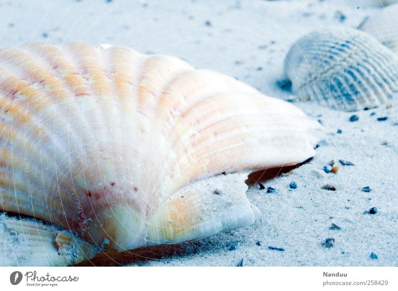 Vacation & Travel Beach Cold Sand Things Still Life Mussel Souvenir Vacation mood Mussel shell Scallop