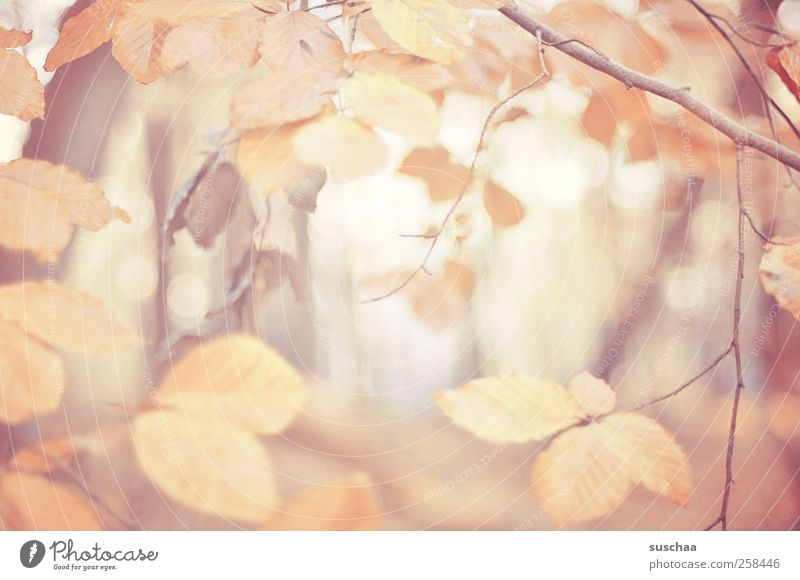 autumn leaves V Environment Nature Autumn Climate Leaf Forest Wood Relaxation branches Light Pastel tone Seasons Colour photo Exterior shot Deserted Day Blur