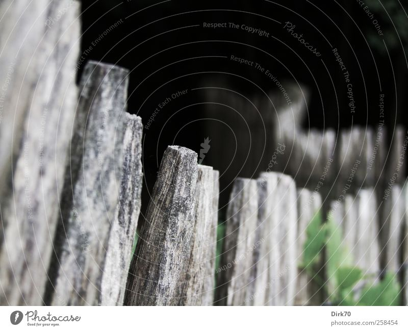 Green White Plant Black Dark Wood Gray Garden Dream Elegant Natural Fly Perspective Bushes Transience Infinity