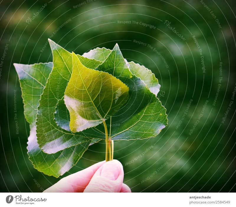 leaf collection Fingers Leaf Green Nature Environment Environmental protection Subdued colour Exterior shot Shallow depth of field