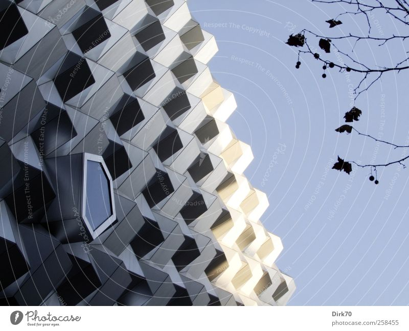 White City Tree Leaf Black Cold Architecture Building Metal Glass Facade Concrete Design Modern Shopping Cool (slang)