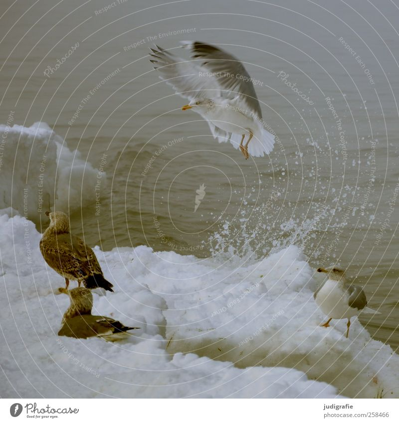 Nature Water Winter Beach Animal Cold Snow Environment Coast Ice Bird Wait Flying Wild Wild animal Climate