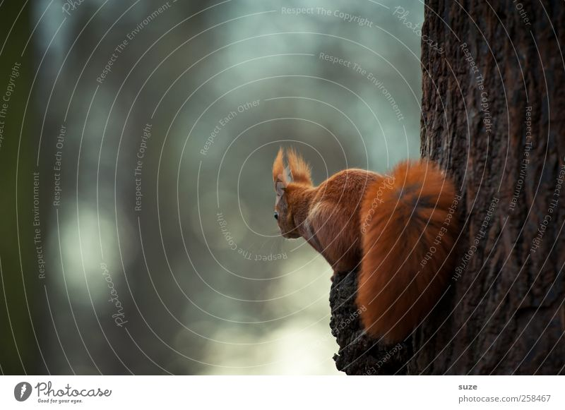 Red Animal Small Brown Park Sit Wild animal Authentic Cute Curiosity Pelt Animal face Tree trunk Animalistic Interest Squirrel