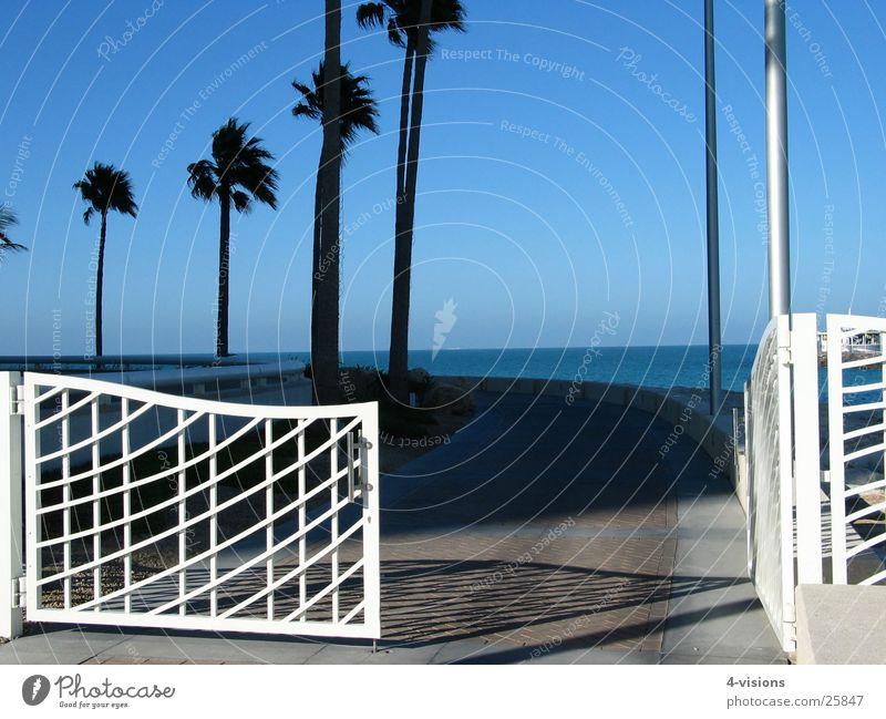 gate Palm tree Dubai Ocean Vacation & Travel Success Blue sky Gate Vantage point Lanes & trails