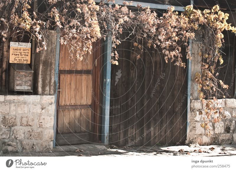 sidelong glance Environment Autumn Plant Leaf Foliage plant Outskirts Deserted House (Residential Structure) Wall (barrier) Wall (building) Facade Door Mailbox