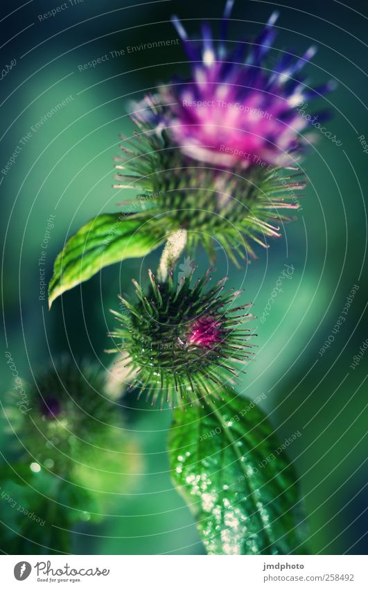 thistle Environment Nature Animal Plant Grass Leaf Blossom Foliage plant Garden Park Meadow Field Blossoming Fragrance Growth Thorny Town Wild Disgust Animosity