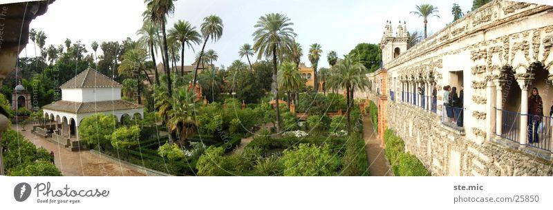 Garden Alcazar Sevilla Seville Spain Palm tree Green Wall (barrier) Temple Architecture Alcàzar