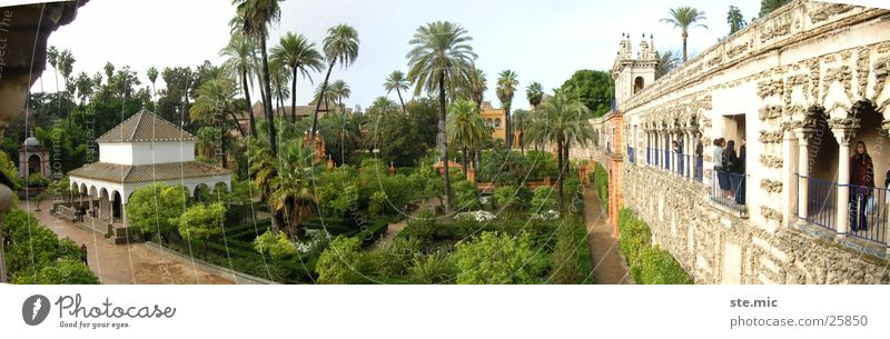 Green Garden Wall (barrier) Architecture Spain Palm tree Andalucia Temple Seville Alcàzar