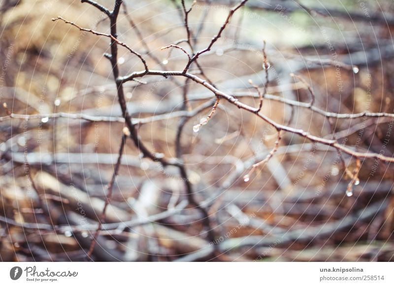 scruffy Environment Nature Plant Drops of water Rain Bushes Fluid Wet Natural Whimsical Branch Blur Wood Colour photo Subdued colour Exterior shot Close-up