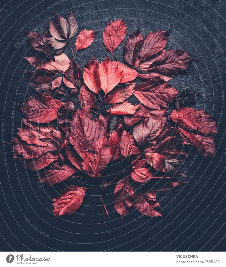Red leaves on black Style Design Garden Nature Autumn Leaf Blossom Decoration Ornament Background picture Dark background Pattern Autumnal Autumn leaves
