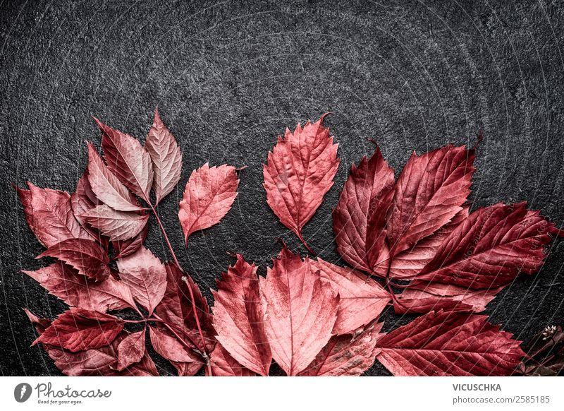 Red leaves on black background Style Design Decoration Nature Autumn Plant Blossom Background picture September ocstober Leaf Frame Dark background Colour photo