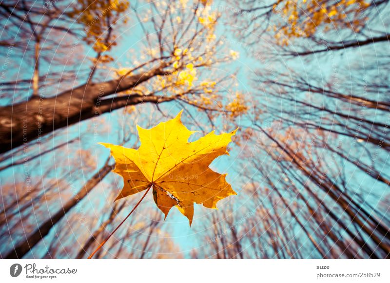 air mail Agriculture Forestry Environment Nature Landscape Plant Elements Air Sky Autumn Climate Beautiful weather Tree Leaf To fall Illuminate Large Blue